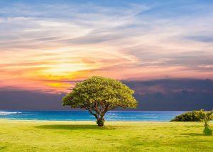 Baum in freier Wildbahn