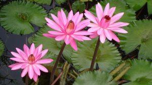 Schönes Motiv: Wandtattoo Blumen