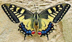 Schmetterling als Wandtattoo
